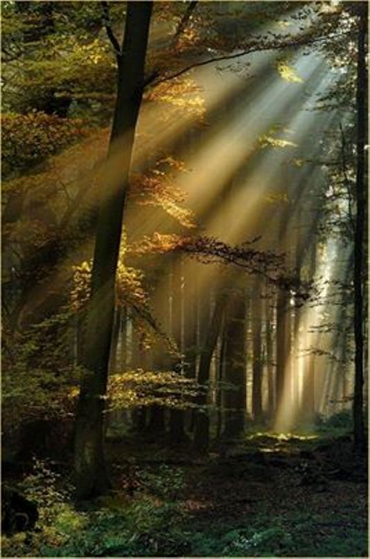 Sun Rays through the Black Forest in Germany